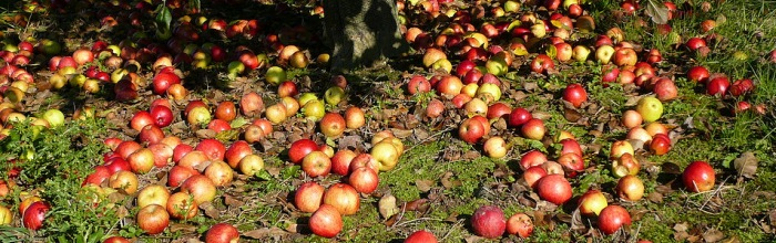 L'Hermitière cider farm L'Hermitière cider farm