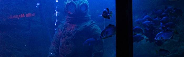 Le Grand Aquarium de Saint Malo Le Grand Aquarium de Saint-Malo